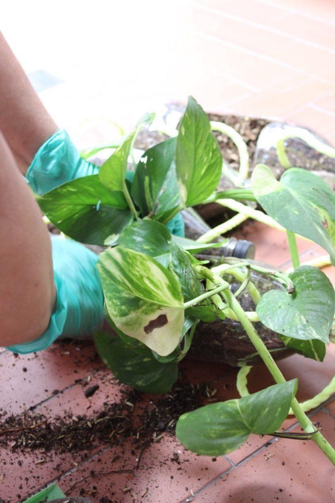 Diy Homemade Vertical Garden Art Craft Ideas