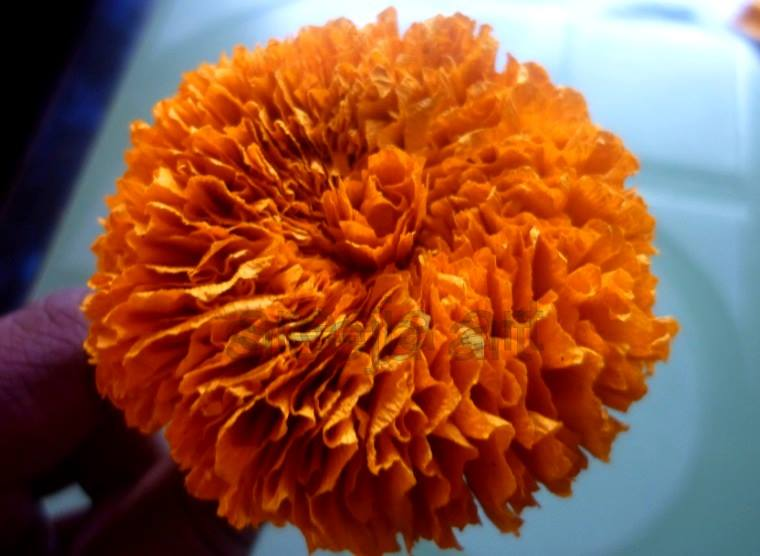 How To Make Marigold Flower With Crepe Paper Art Craft Ideas